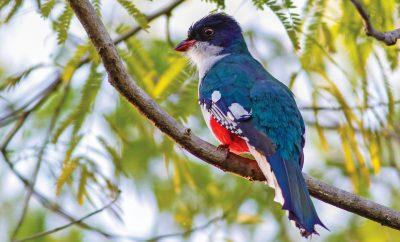 A garden of biodiversity in Cuba